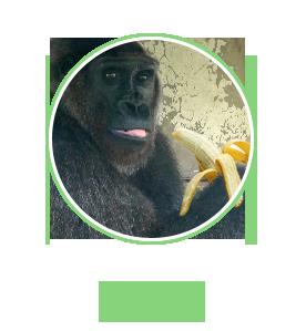 profile6